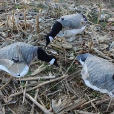 Canadian Blue Goose Hunter Pack